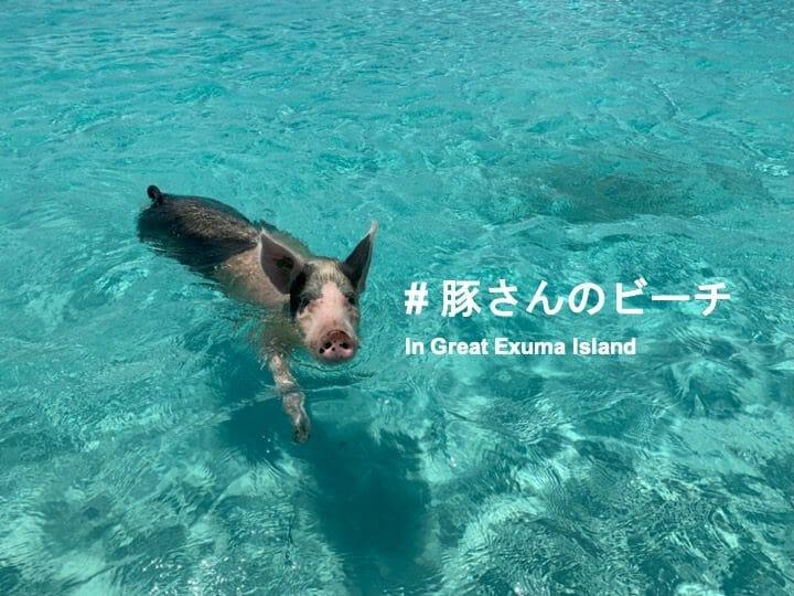 【バハマ・エグズーマ諸島】話題の豚が泳ぐビーチへ無人島ツアーで行ってきた!